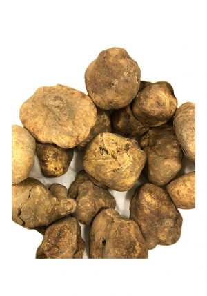 Fresh White Truffle - Truffles - Buon'Italia
